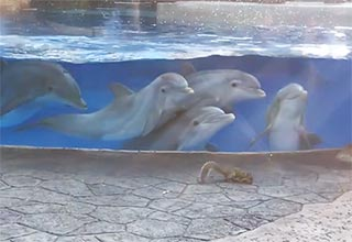 dolphins can't handle squirrels