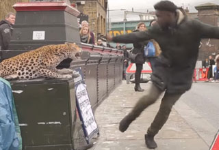 Escaped Spotted Leopard Prank Scares The Crap Out Of Pedestrians
