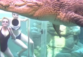 Would You Go Swimming With This Giant Crocosaurus?