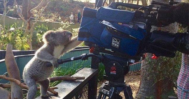 Welcome to the eBaum's World Caption Contest #146 - Koalaman