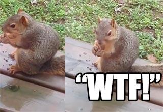 fat little squirrel killin them noms
