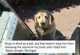 the best dog-spotting page on the internet