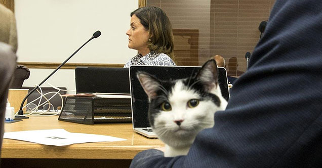 Welcome to the eBaum's World Caption Contest #150 - Lawyer Cat
