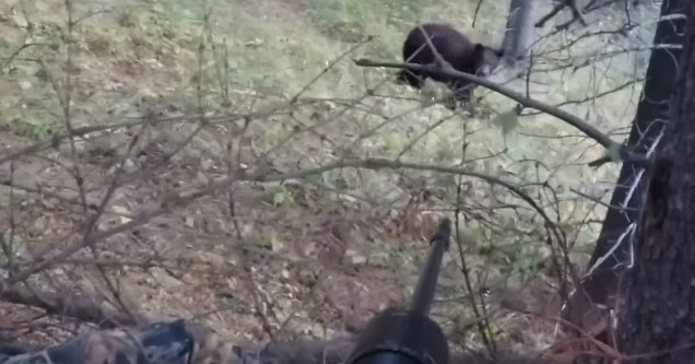 Hunter Displays His Giant Balls As A Bear Charges Right At Him