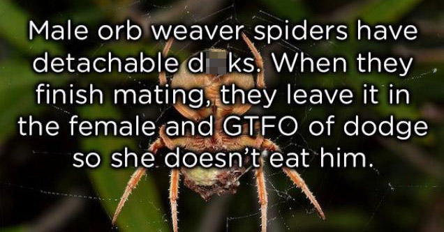 22 Strange Animal Facts That Will Leave You Asking WTF?