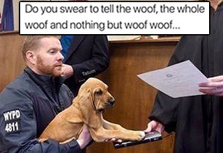 dog swearing in, in court