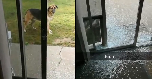 a dog outside in the yard next to an image of broken glass all over the floor