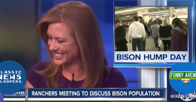 news anchor with brown hair looking off camera laughing about bison humpday story