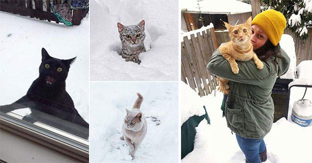 cats freaking out in the snow