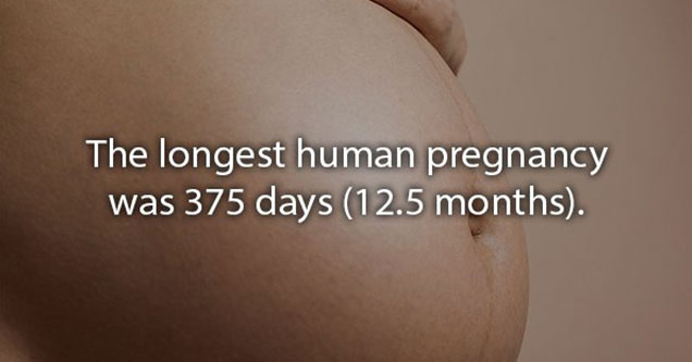 the longest pregnancy was 12 months