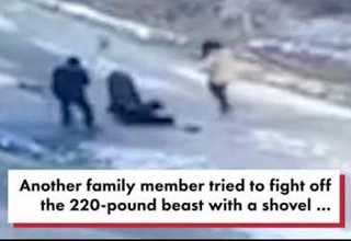 Ferocious wild boar attacks elderly man