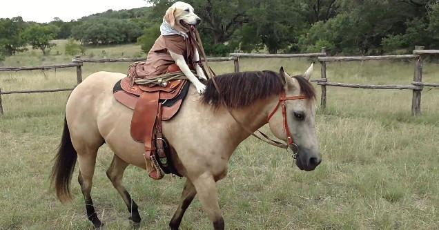 Dog riding horse.