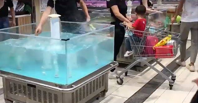 Fish jumps out of tank into shopping cart