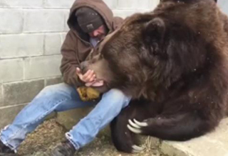 man wearing jacket and blue jeans sitting down comforting a huge 10 foot bear that is sick
