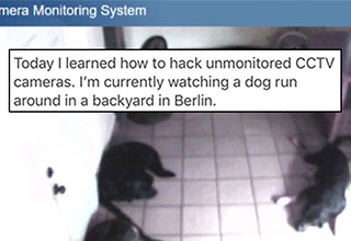 watching dogs through a cctv camera