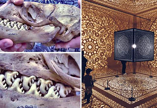 The jaws of a Crabeater seal,  An exhibit at the Peabody Essex Museum covered in fractals