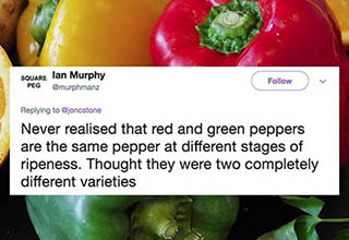 green yellow and red peppers close up