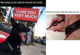 i like you very much happy dog  and happy pen wholesome memes
