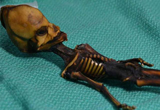 tiny alien skeleton is revealed