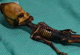 tiny alien skeleton is revealed