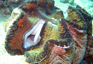 giant clam on the ocean floor