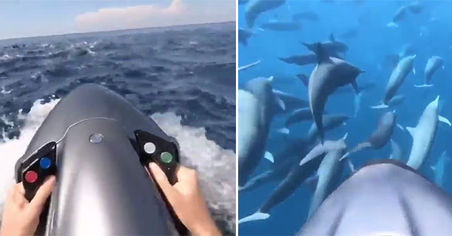 using a machine to swim with dolphins