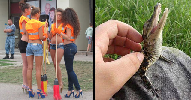 a group of hote female construction workers in booty shorts and high heels and a baby alligator being petted