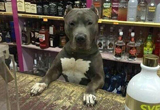 dog looking over a liquor store counter