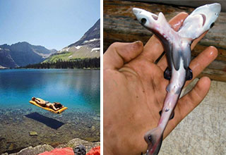 person floating in the lake at glacier national park, a man holding a two-headed sharks