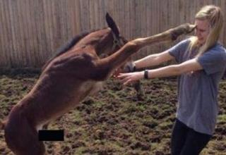 erect donkey wants a hug