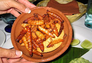 a woman is holding a bowl of worms often used it cheaper versions of tequila