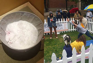 a cat in a bucket curled up perfectly, a goat yoga session in a public square