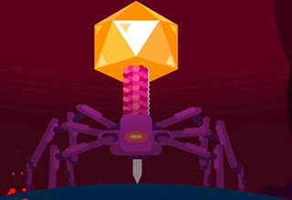 a type of micro-organism called a bacteriophage