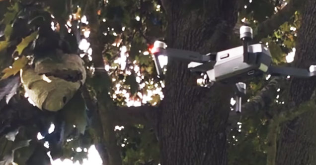 a drone attacking a hornets nest in a tree