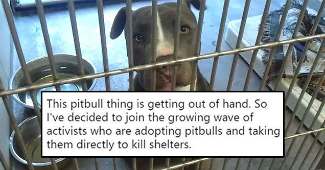 pit bull in a kennel with text overlay
