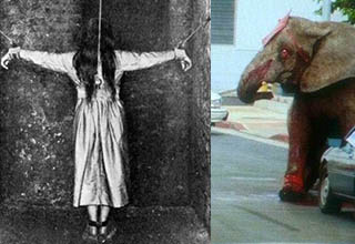 a lady being restrained in an old insane asylum, an elephant with a thousand yard star facing off with humans
