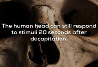 a human skull with text about being conscious for 20 seconds after decapitation