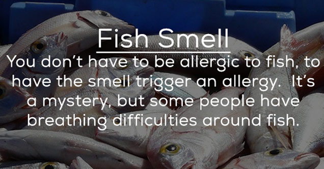 a photo of fish with text about some people are allergic to smells like fish