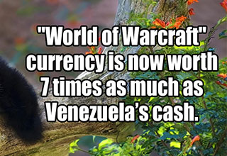 laughing panda with a fact about wow cash