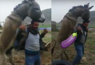 Donkey Mounts Drunk Guy