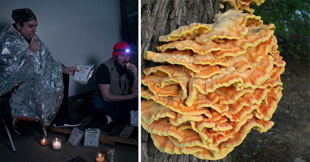 a guy wearing a protective blanket while handing over rations, a fungus called chicken of the woods