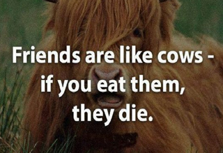eating cows is eating friends