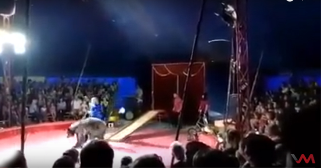 Circus Bear Savagely Attacks Trainer
