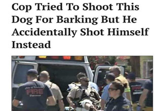 a cop tried to shoot a dog and shot himself