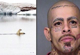 polar bear riding another polar bear in the arctic, a man with face tattoos including some where his eyebrows should be