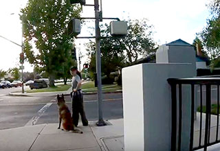 a lady at the crosswalk with her dog looking back at the lady in the chair