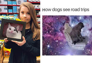 lady holding a picture of a cat whose expression looks like her's, and a psychedelic picture of a dog in a car
