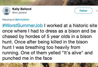 a funny tweet about a crappy summer job with a background of a buffalo