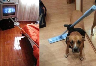 a man using a rod to change the television, a dog with a mop strapped to him
