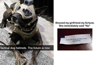 a dog wearing tactical gear and a naughty fortune from a cookie